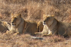 From Jo'burg: Lion Park & Cradle of Humankind with Lunch
