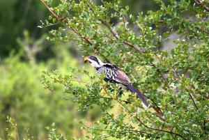 From Johannesburg: 2-Day Safari into Kruger National Park