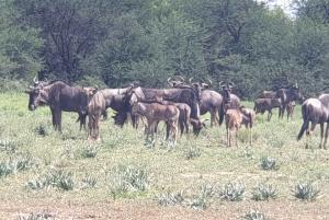 From Johannesburg or Pretoria: Dinokeng Game Reserve Safari