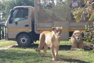 From Lion & Safari Park Half-Day Tour