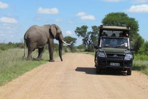 Full Day Open Safari in Kruger National Park