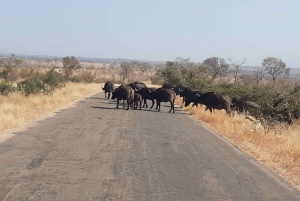 Johannesburg: Full Day Open Safari in Kruger National Park