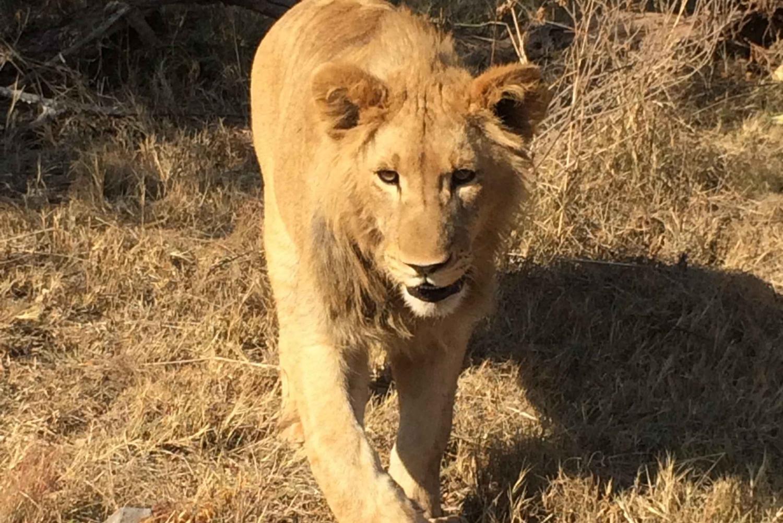 Johannesburg Lion Park and Pilanesberg Safari