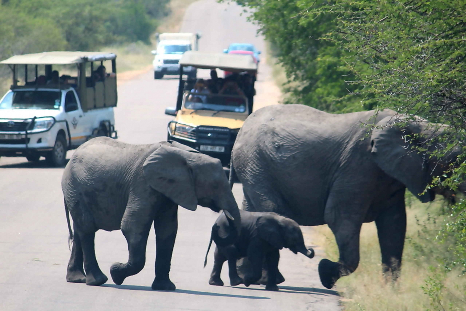 Kruger National Park 2-Day Camping Safari from Johannesburg