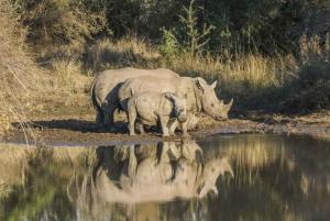 Kruger National Park: 4-Day Private Safari