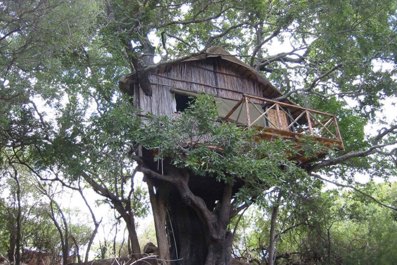 Kruger Park: 4-Day Treehouse Safari