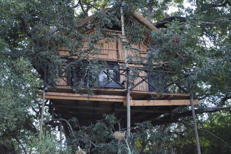 Kruger Park: 5-Day Tree House Safari