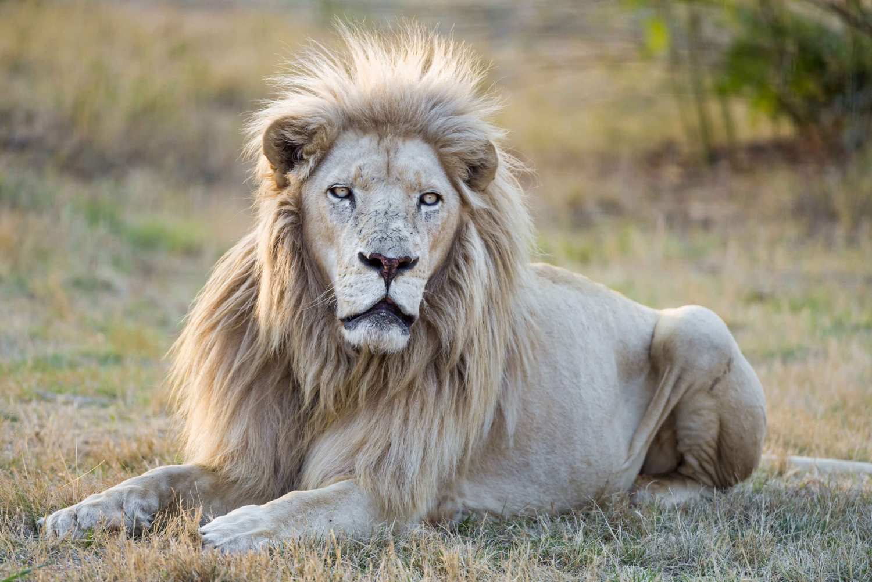 Lion and Safari Park Half-Day Tour