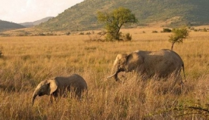 Pilanesberg and Black Rhino Reserve