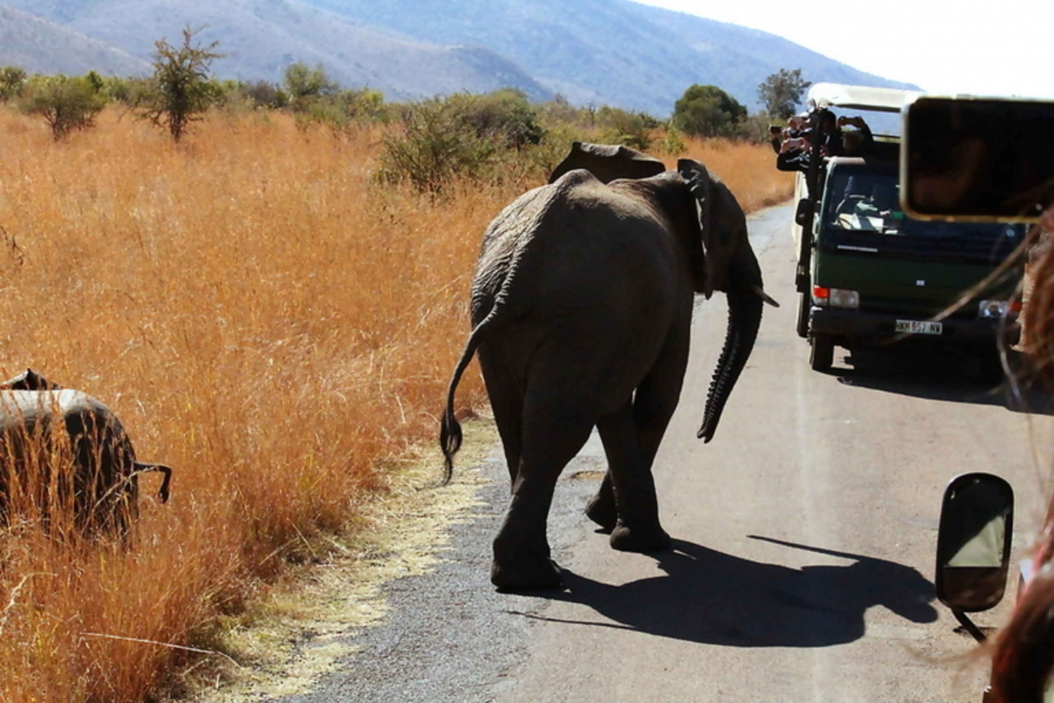 Pilanesberg Full-Day Trip with Game Drive by Open Vehicle