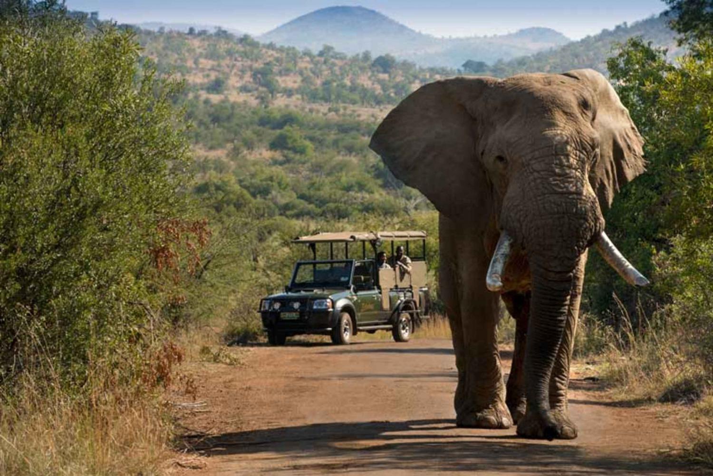 Pilanesberg Game Reserve: Safari by Open Vehicle