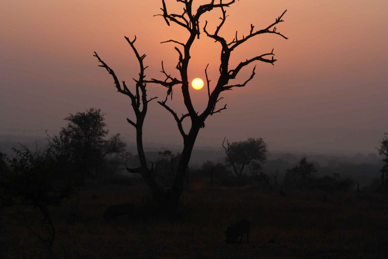 Pilanesberg National Park: 2-Day Camping Safari
