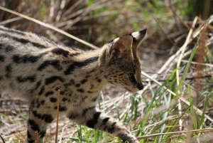 Pilanesberg National Park: 2-Day Safari with Chalet