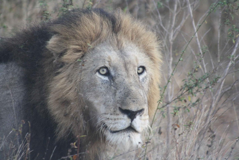 Pilanesberg National Park: Full-Day Safari from Johannesburg