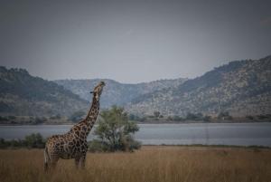 Pilanesberg: Open-Vehicle Safari