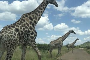 Private Pilanesberg National Park Safari