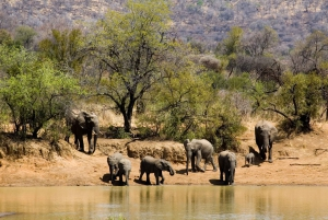Sun City & Pilanesberg Nature Reserve Full-Day Tour