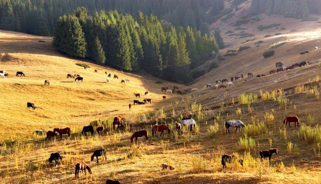 Hills, Horses & Hospitality in Kazakhstan