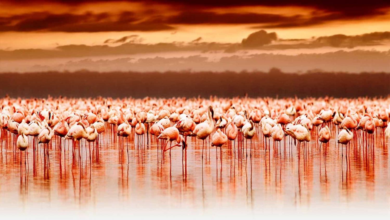 My Guide Kenya