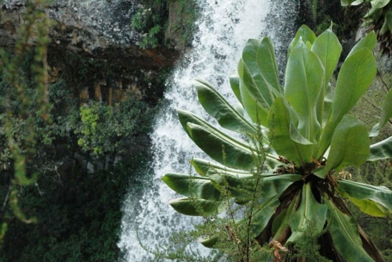 2 Days Overnight Safari to Aberdares or Mt Kenya