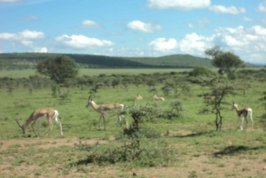 3-Day Maasai Mara Luxury Safari - Experience Kenya by Air