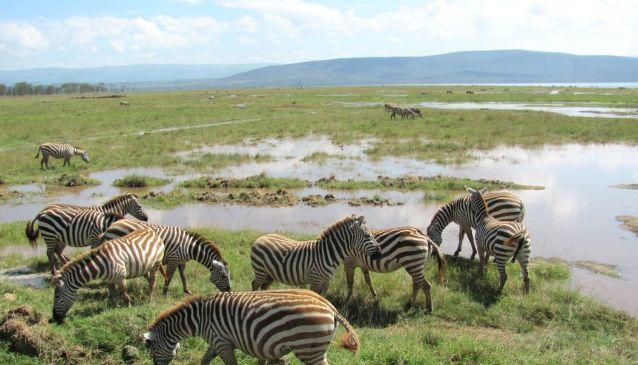 4a Seven Day Wildlife Safari