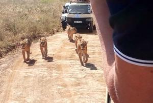 Aberdare National Park Tour From Nairobi