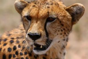 Amboseli: Three Day Safari