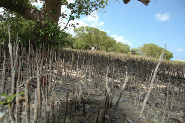 Arabuko Sokoke Forest & Mida Creek Tour from Malindi
