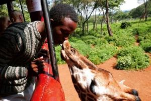 David Sheldrick Wildlife Trust & Giraffe Center with Lunch