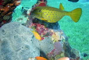 Diani Beach: Kisite Marine Park Dhow & Snorkeling with Lunch