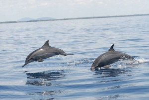 Diani Beach: Kisite Marine Park & Wasini Island Dhow Tour