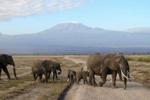 Four-Day Safari to Amboseli and Tsavo