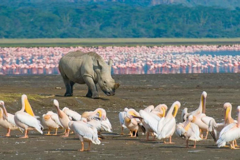 Four-Day Safari to Lake Nakuru and Maasai Mara