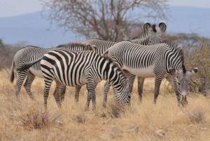 Four-Day Safari to Samburu and Aberda