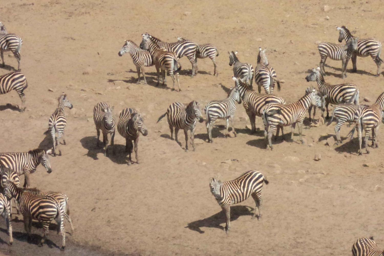 From Mombasa: 3-Day Safari to Tsavo East and Salt Lick