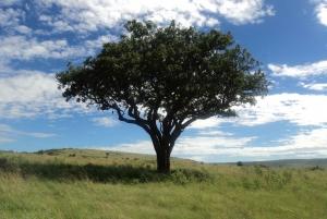 From Nairobi: 2-Day Masai Mara Safari with Flight