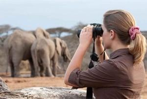 From Nairobi: Day Trip to Amboseli National Park