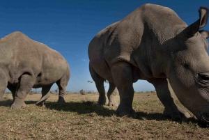 From Nairobi: Full-Day Tour to Ol Pejeta Conservancy