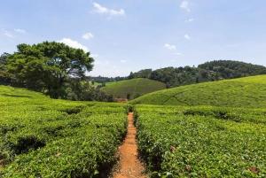 From Nairobi: Kiambethu Tea Farm Tour & Lunch