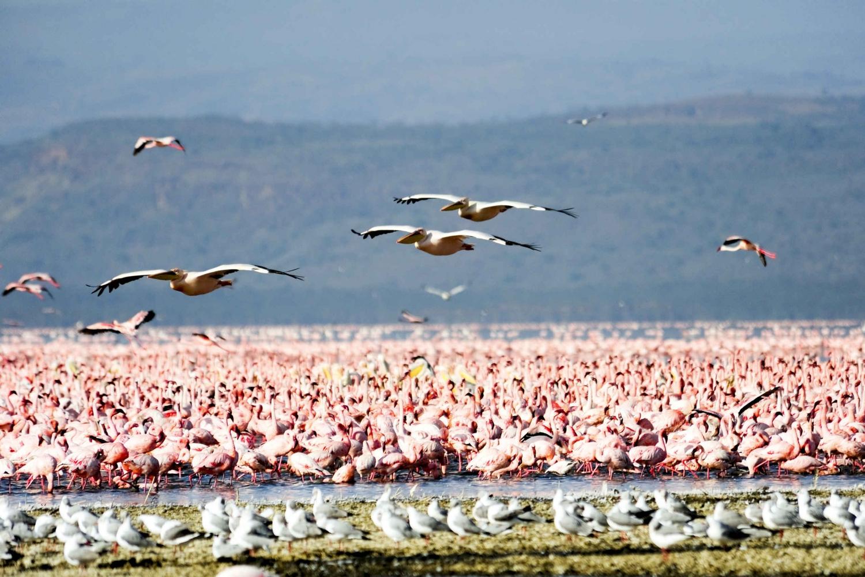 From Nairobi: Lake Nakuru National Park Day Trip