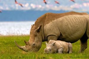 From Nairobi: Lakes Nakuru & Naivasha National Park Day Tour