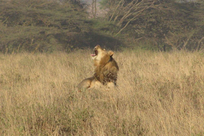 From Nairobi: Maasai Mara Safari