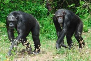 From Nairobi: Ol Pejeta Conservancy Private Day Tour