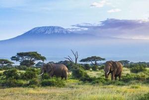 From Nairobi or Mombasa: Amboseli National Park 3-Day Tour