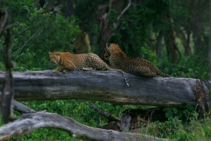 From Nairobi: Private Lake Nakuru Express Tour
