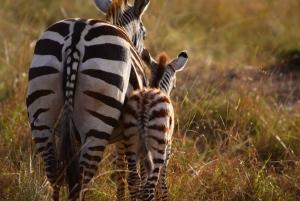 From Nairobi: Private Nairobi National Park Tour