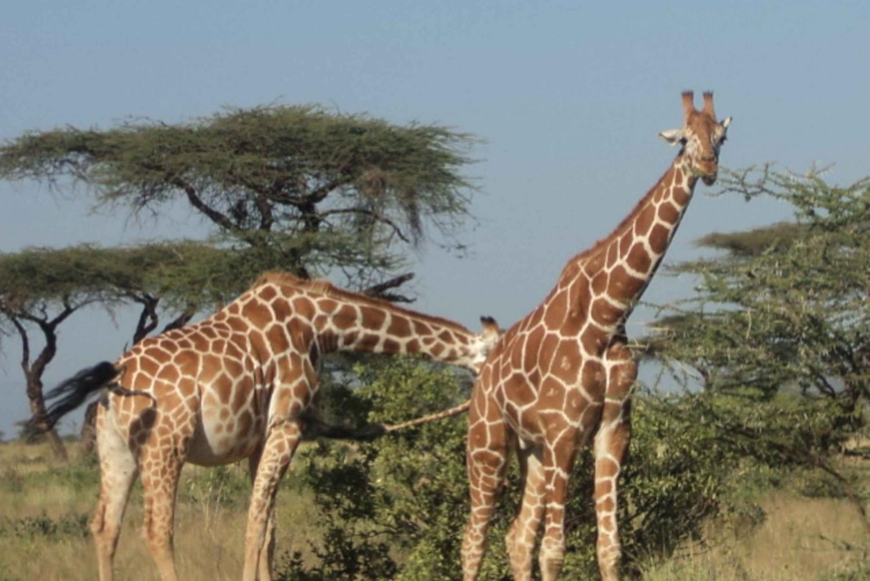 Giraffe Center and Karen Blixen Museum Tour from Nairobi