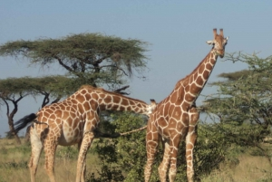 Giraffe Center and Karen Blixen Museum Tour from Nairobi