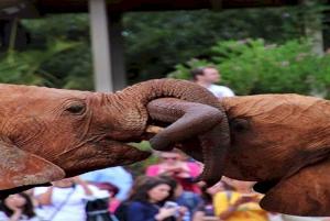 Giraffe, Elephant Orphanage & Bomas of Kenya Day Tour